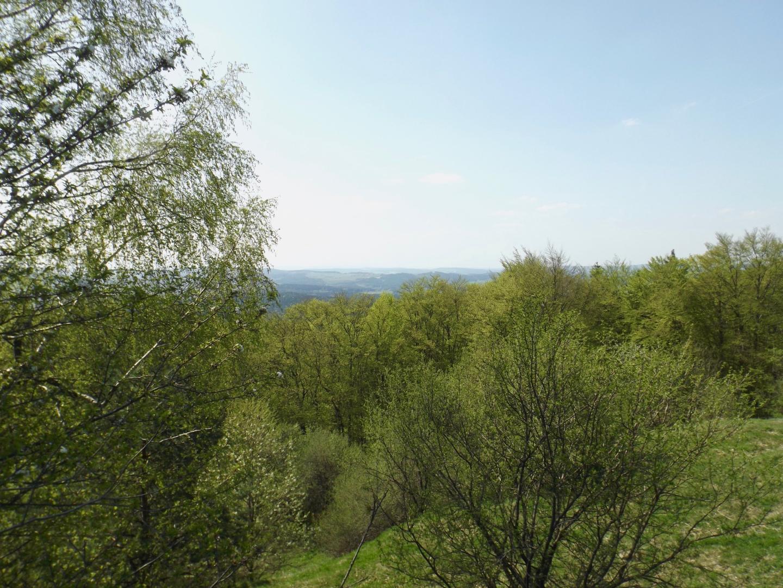 Nordwestpanorama mit Frühjahrslaub