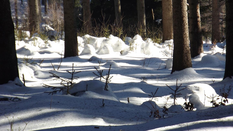 Das Dorf der Schnee-Elfen