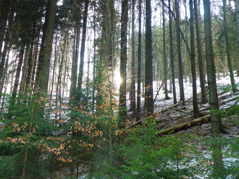 Ab und zu schaut die Sonne zwischen den Bäumen hervor
