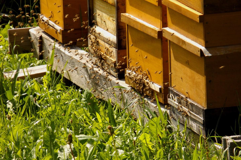 Ideales Bienenwetter
