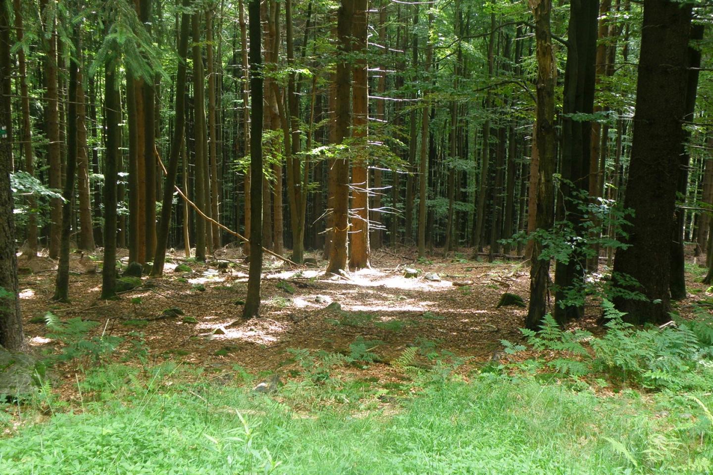 Lichtspiele am Waldboden