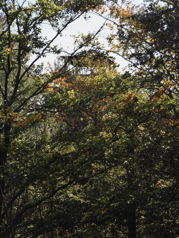 Jetzt im Herbst sieht man den Aussichtsturm auch von unten