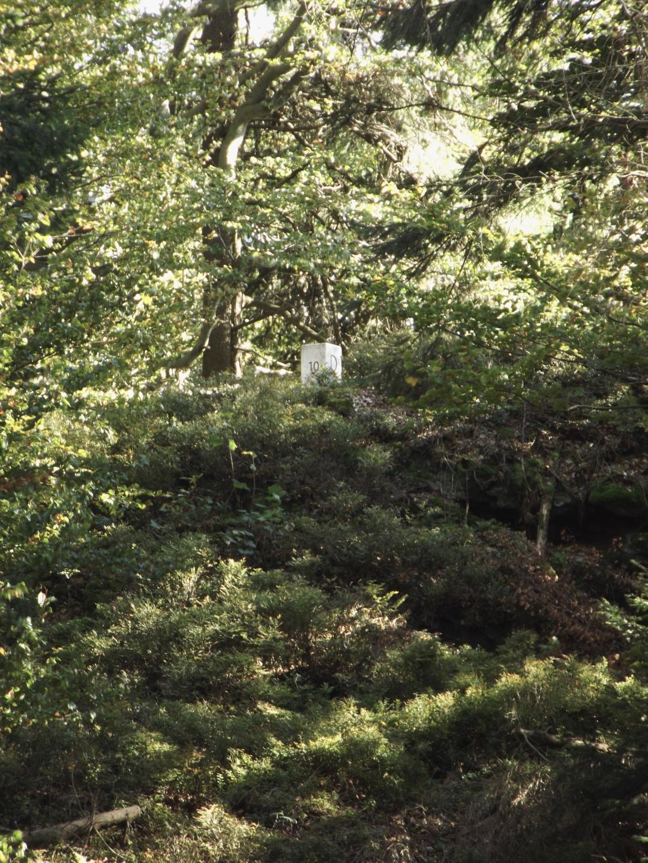 Dieser Grenzstein steht im Naturschutzgebiet