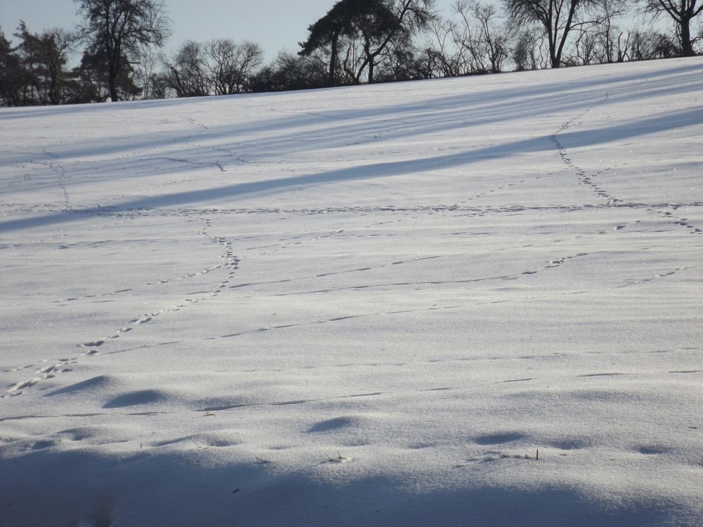 Wildspuren im Schnee