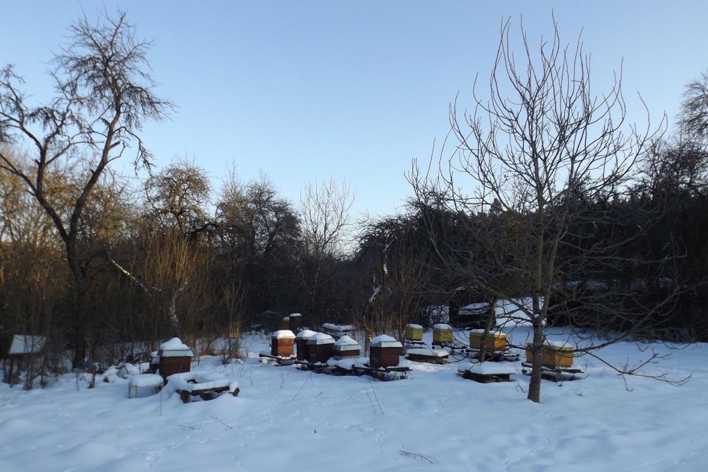 Bienendorf im Winterschlaf