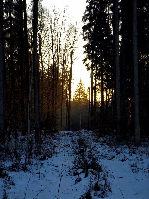 Sonnenuntergang im Hirschwald