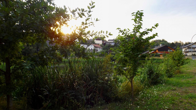 Sonnenmoment am Pfeifferweiher