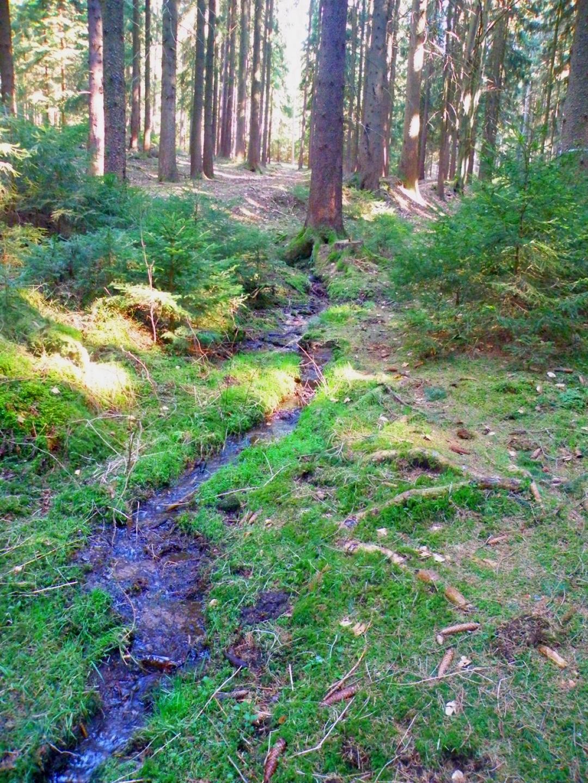 Der Bach entspringt dem Baum im Hintergrund und läuft etwa 150 Meter den Hohlweg hinunter, ehe er wieder im Waldboden versickert