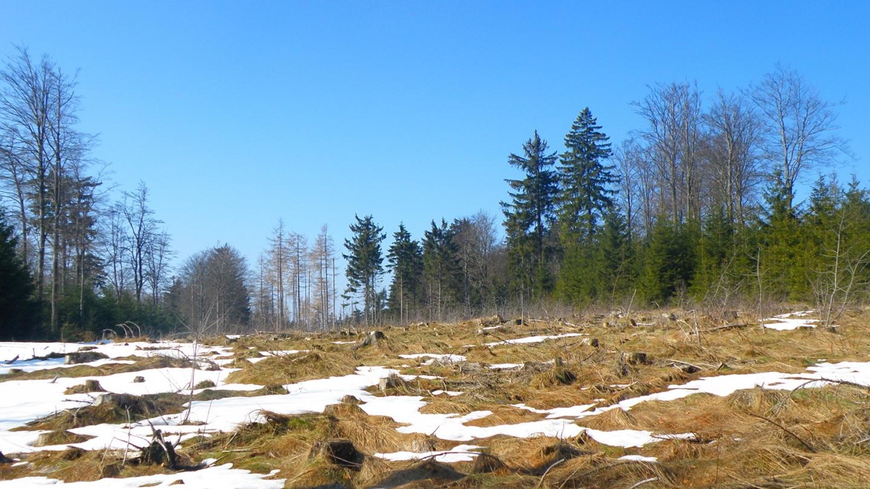 n Lichtungen ist der Schnee auch oberhalb 800 m schon fast weg
