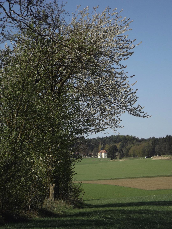 Johannisbergkirche unter dem Dach von Mama Natur