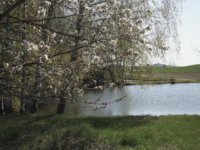 Blüten am Teich