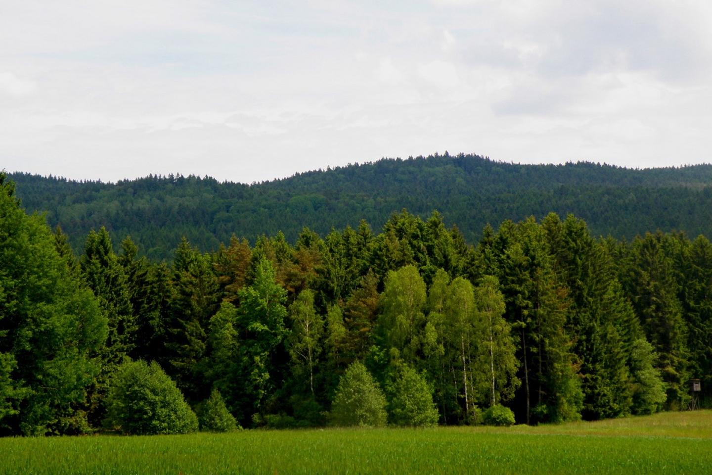 In diesem Wald waren wir unterwegs