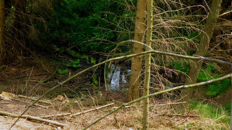 Das Güttinger Loch tarnt sich als Quelle