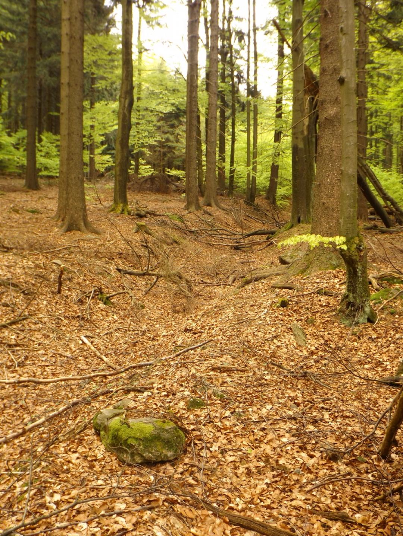 Teil der Altstraße von Waldmünchen nach Taus (Domažlice)