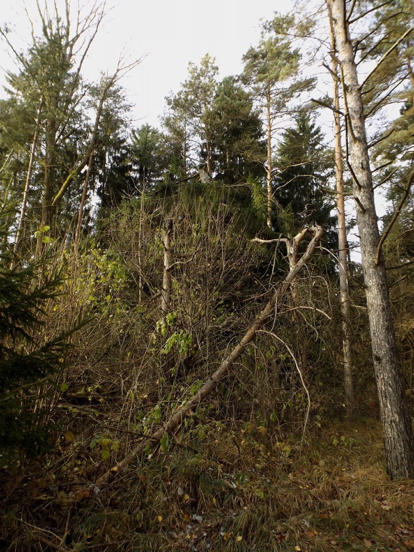 Größerer Baumbruch