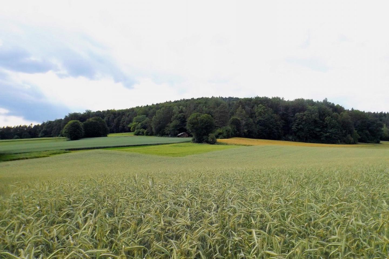 Vier Getreide