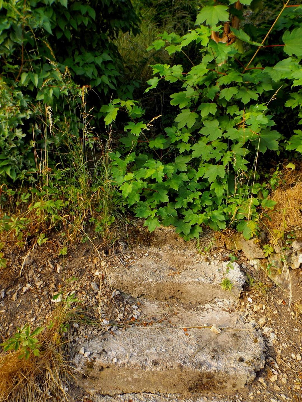 Zugewachsene Treppe in Thalheim