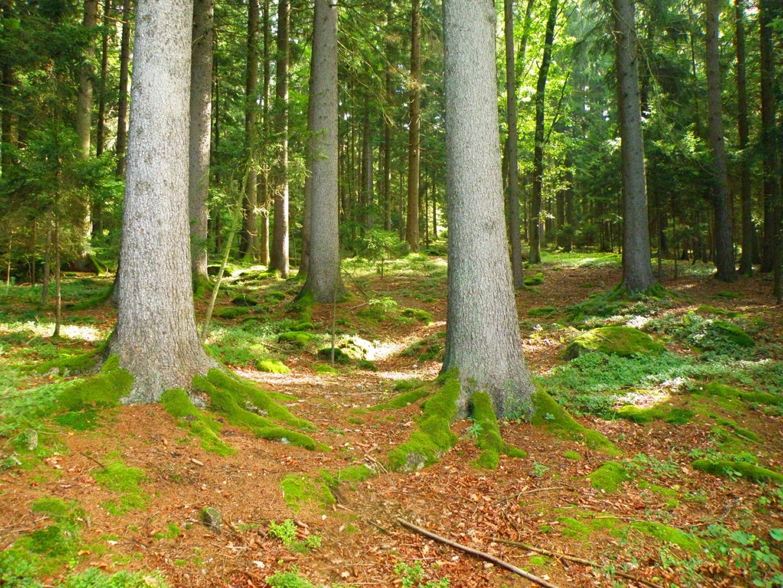 Lichtflecken am Waldboden
