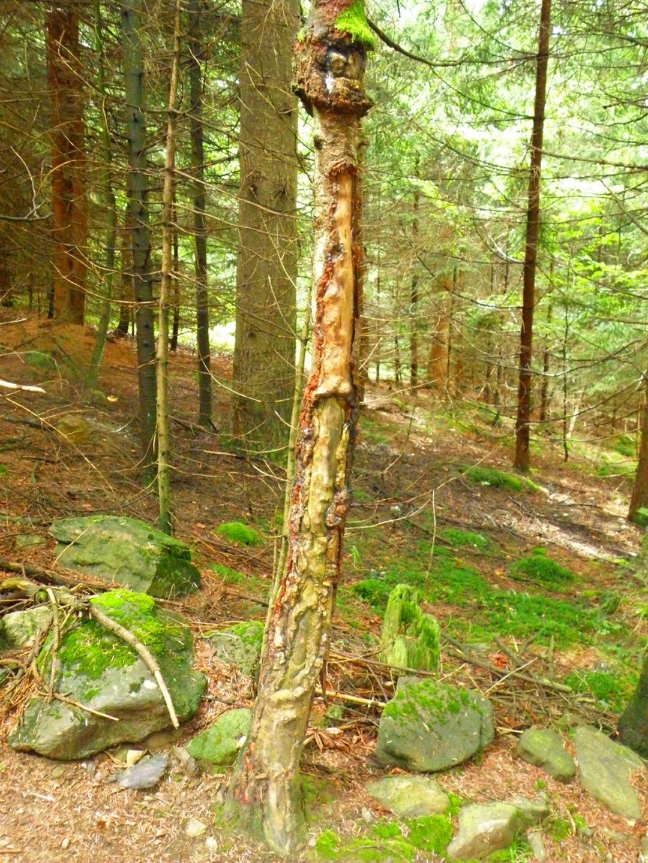 Einige Bäume sind aufgerissen
