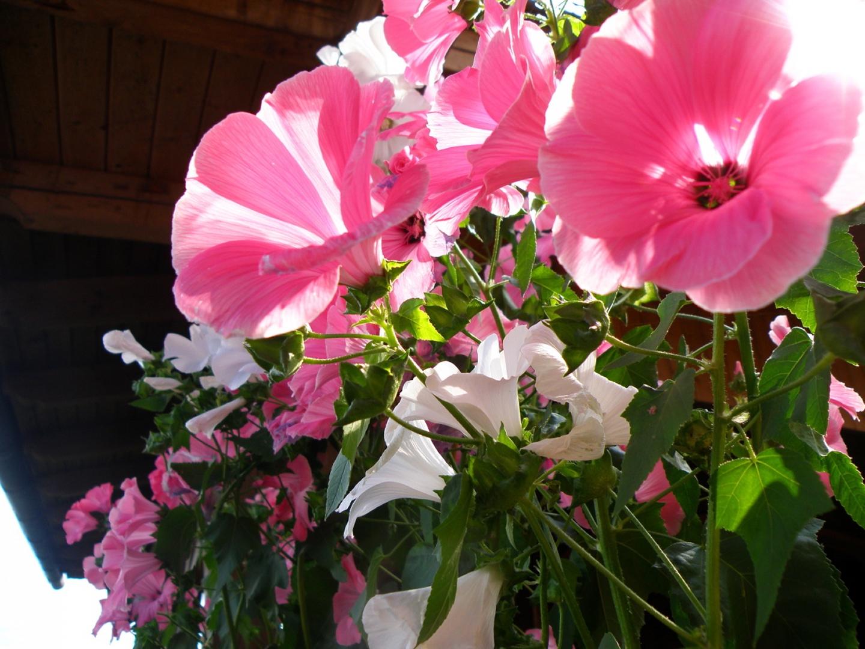 Hüttenblüten