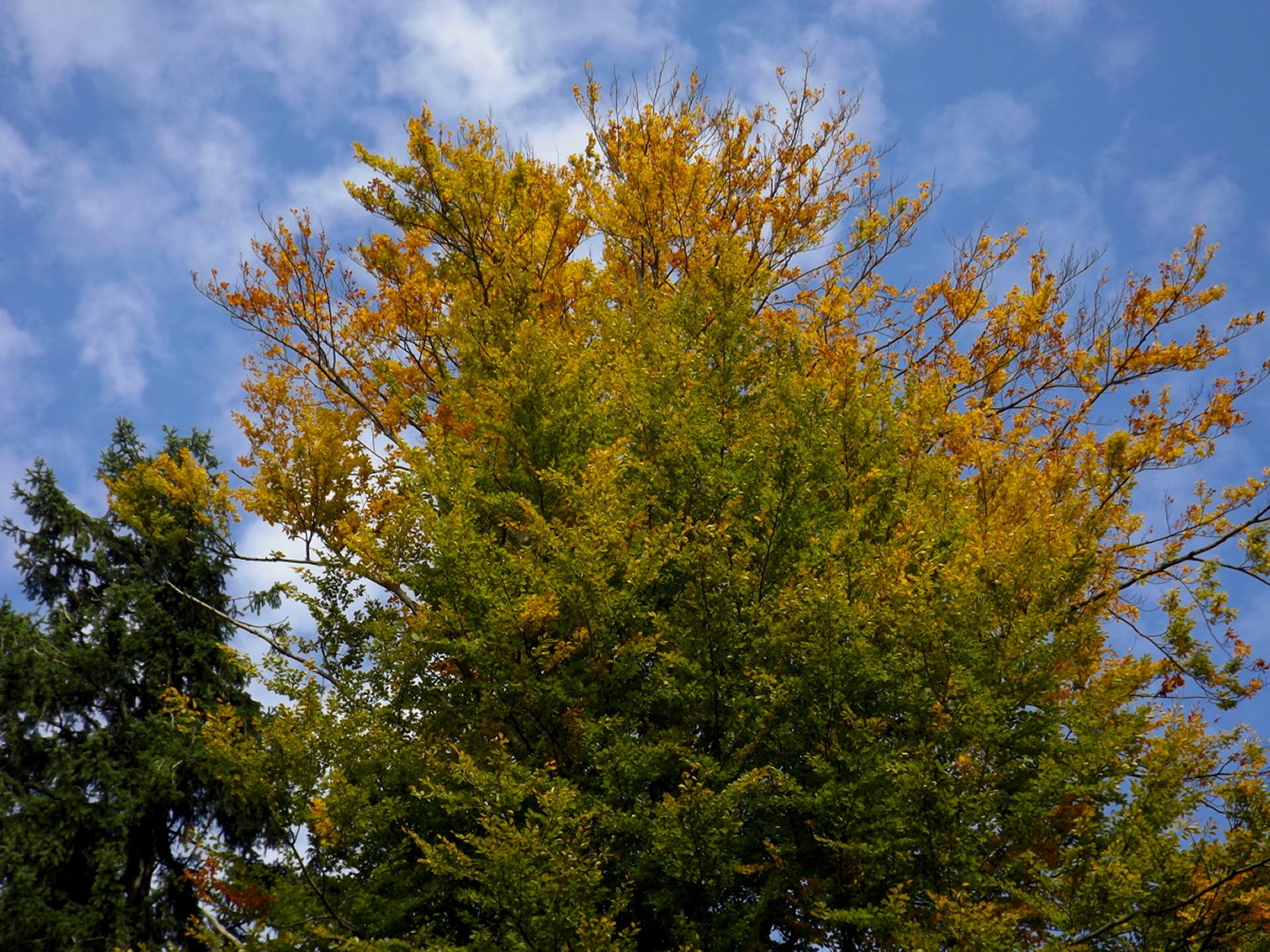 Ein Mal im Jahr darf ein Herbstfarbenbild sein