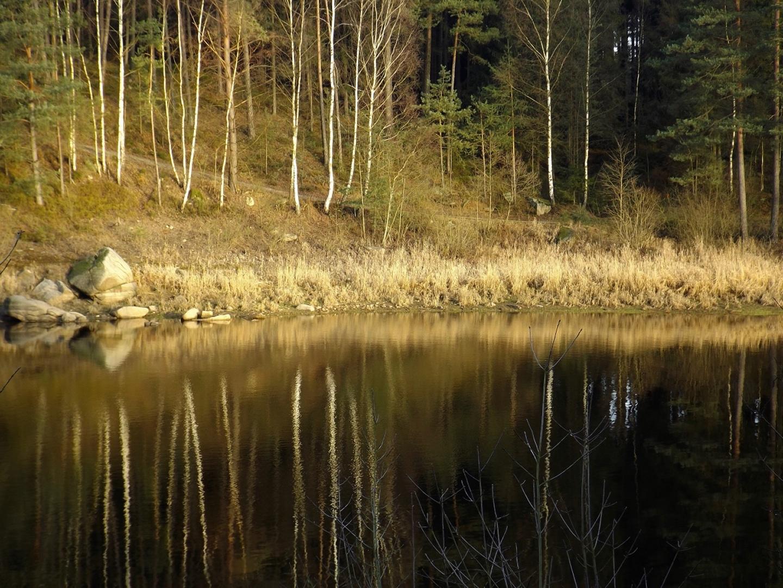 Ufergras