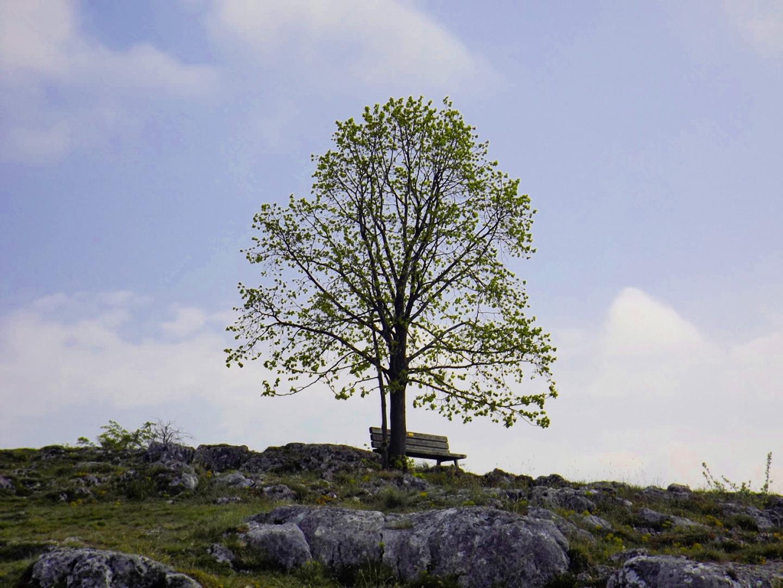 Baum mit Bankerl