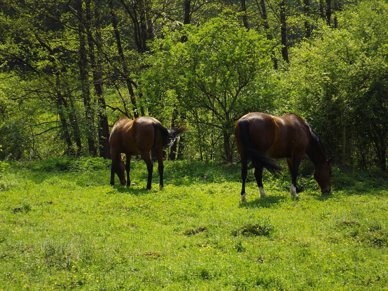 Interesselose Pferde