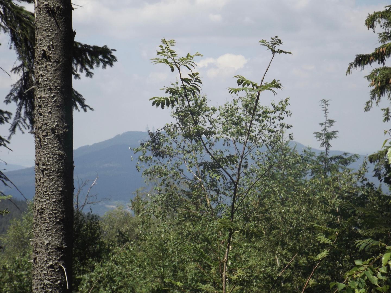 Junger Baum zwischen dem Hohen Bogen