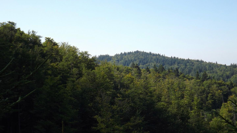 Waldhäuserriegel