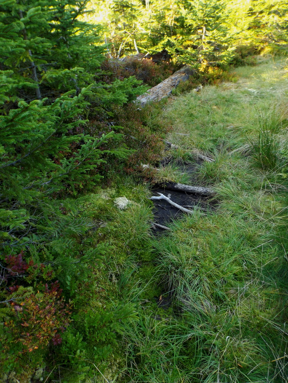 Auch der Filz am Waldhäuserriegel ist ziemlich vertrocknet