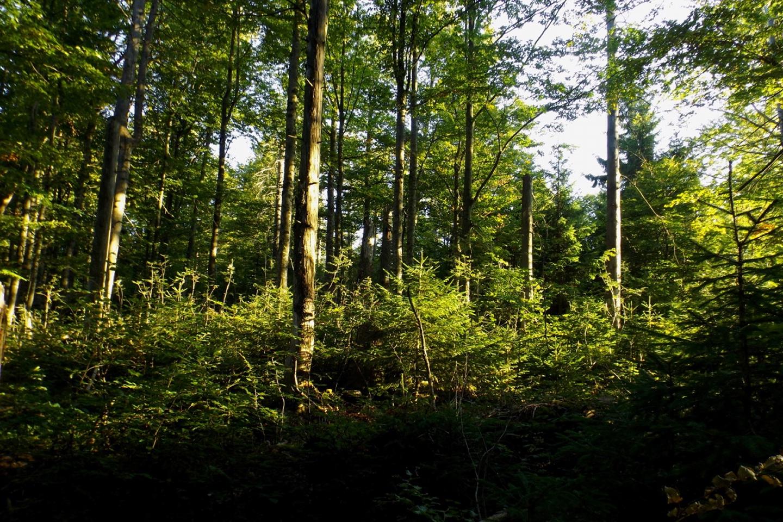 Gipfelbereich am Waldhäuserriegel
