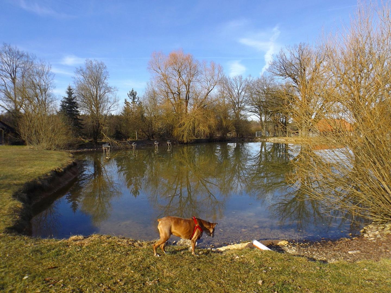 Großer Teich mit Spiegelung