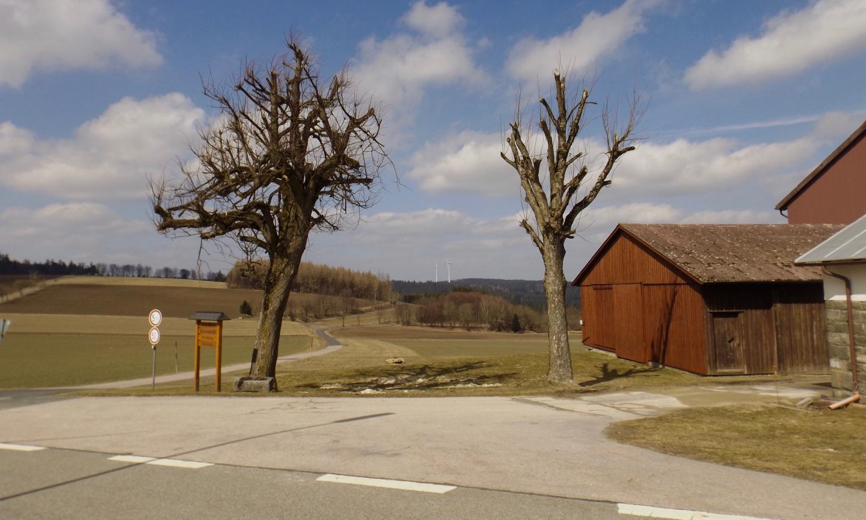 Windräder zwischen Bäumen