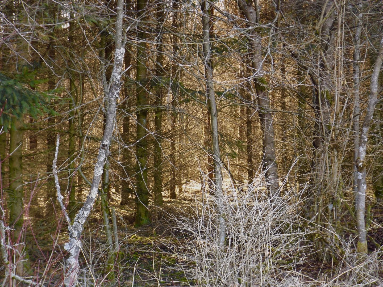 Lichtspiel im dichten Wald