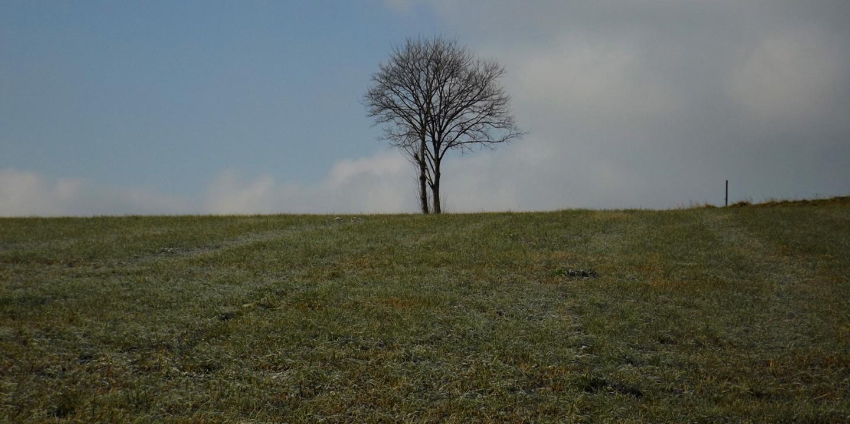 Orientierungsbaum