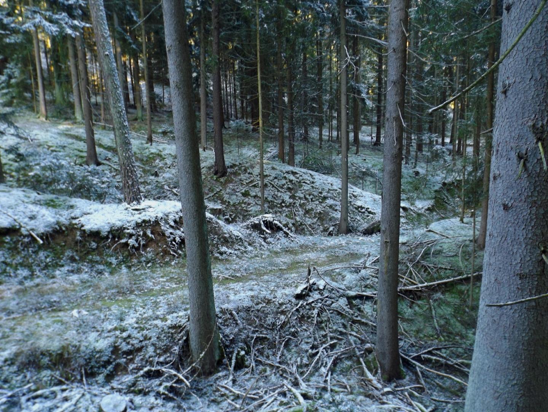 Und quer drüber eine moderne Forsttrasse