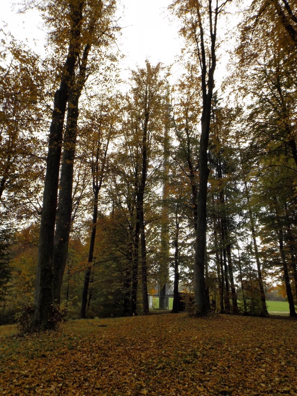 Sendeturm hinter Bäumen