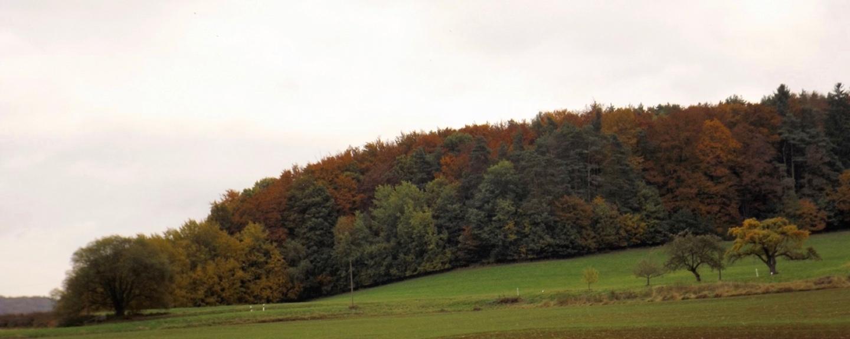 Herbstfarben am Keilberg
