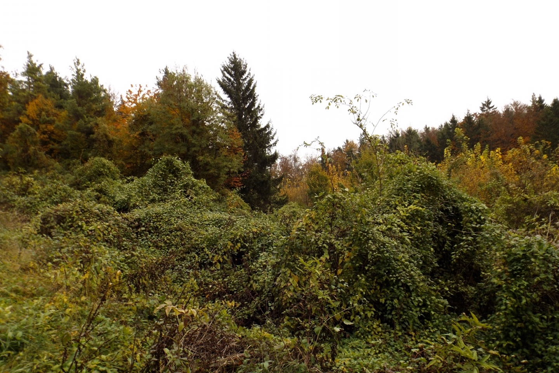 Buschgebirge
