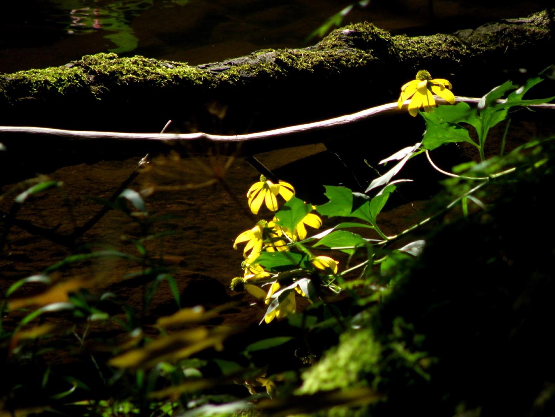 Uferblüten im Gegenlicht
