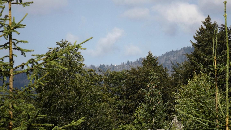 Durchblick zum Waldschmidthaus
