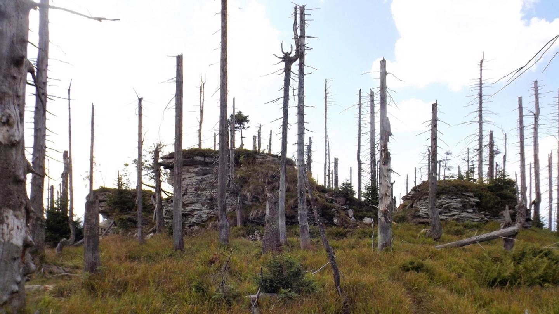 Gipfelbereich des Plattenhausriegel