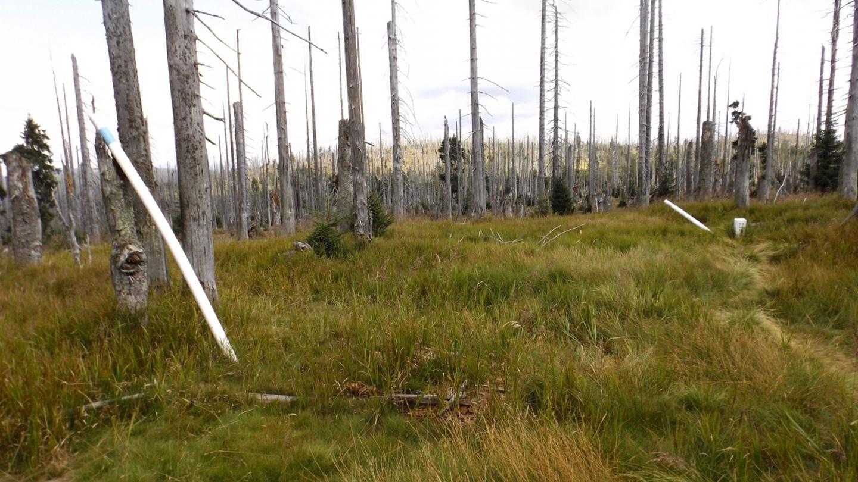 Hier gibt es nicht nur umgeworfene Bäume