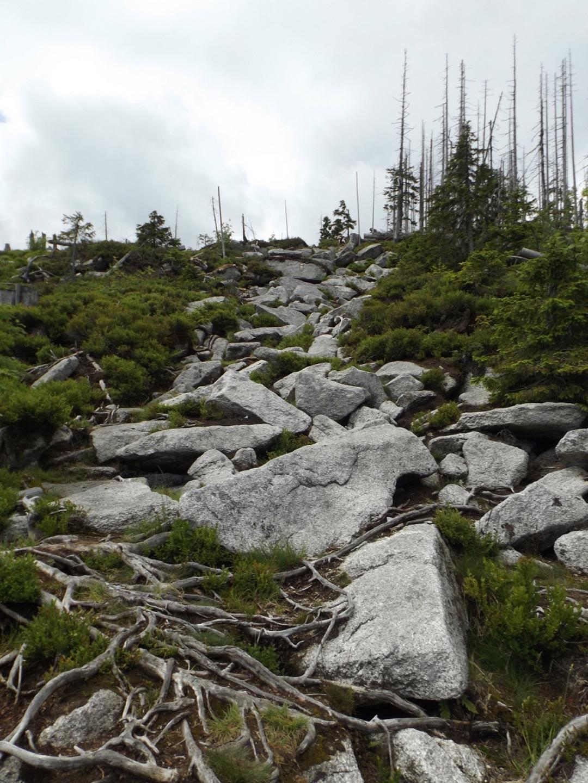 Ohne Wald wäre das hier ein hübscher Schutthaufen