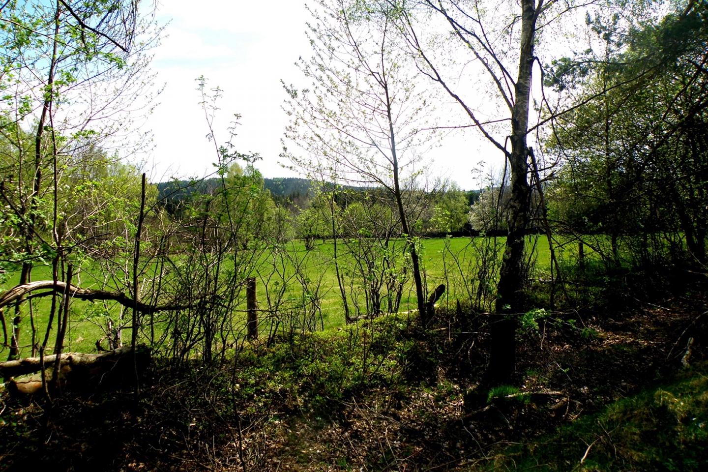Ehemaliger Todesstreifen, noch früher Dorfgebiet von Plöss / Pleš, jetzt Weideland