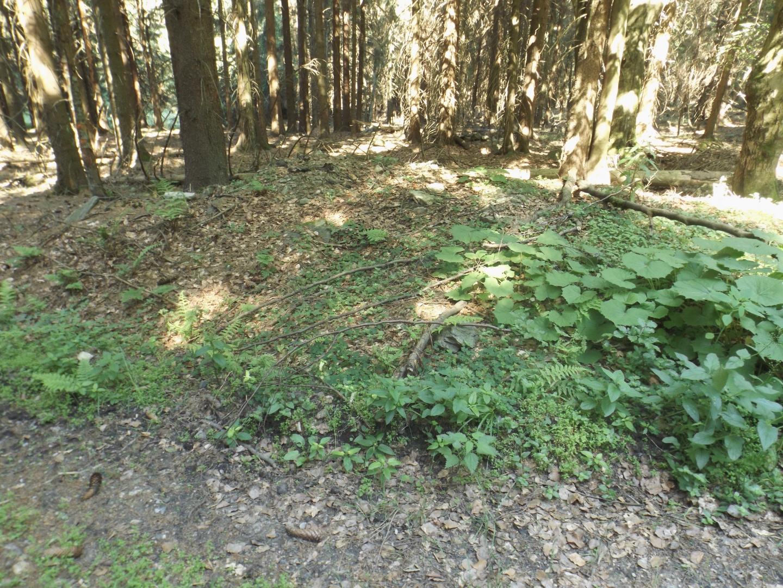 Überreste einer Forstdiensthütte?