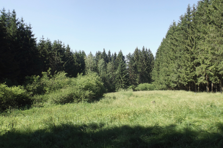 Plösserlohe