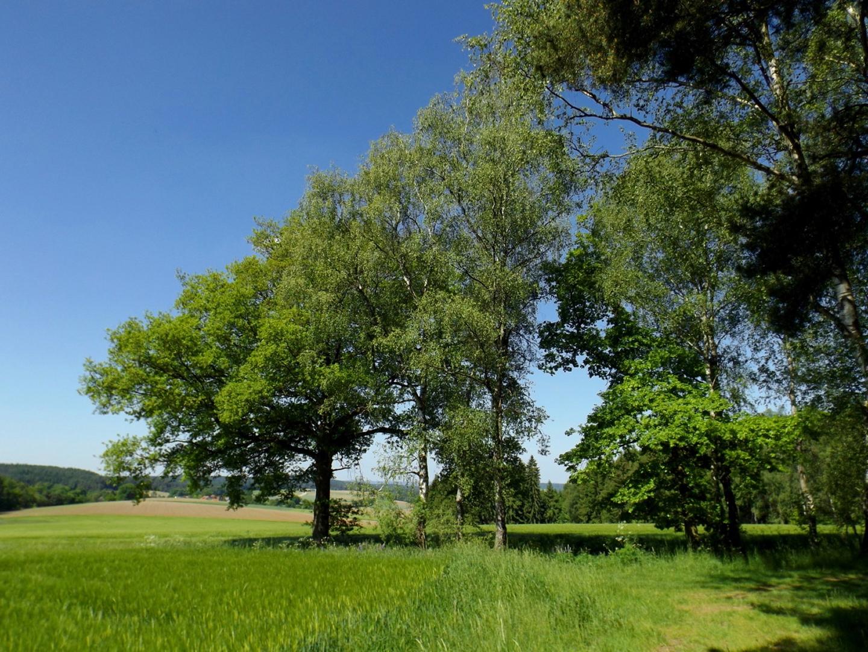 Baumdreifaltigkeit