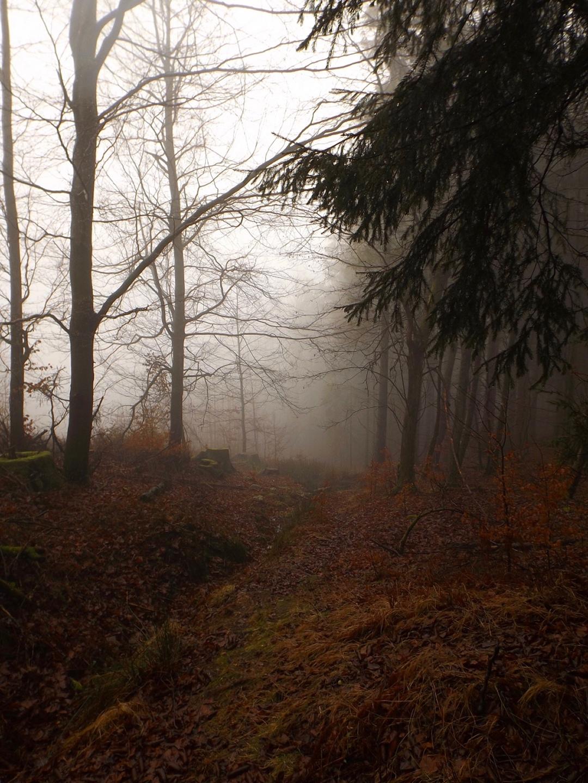 Nebelstimmung auf den obersten Bachmetern